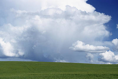 Usa, Idaho, Green Wheat Field, Clouds Poster