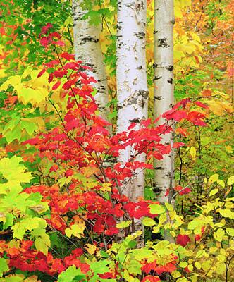 Usa, New York, Adirondack Park, Autumn Poster