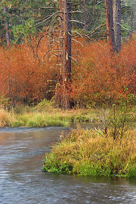 Usa, Oregon, Metolius River Poster