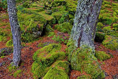 Usa, Oregon, Rogue River Wilderness Poster