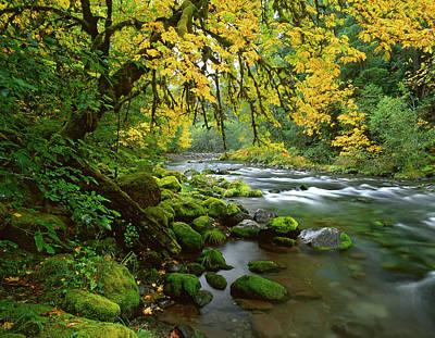Usa, Oregon, Willamette Valley Poster