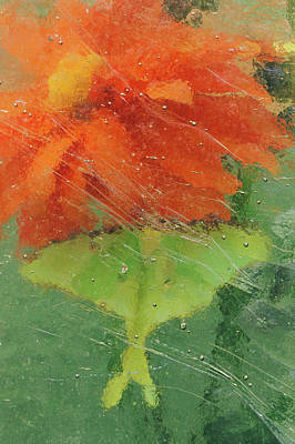Usa, Pennsylvania, Luna Moth On Orange Poster by Jaynes Gallery