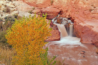 Usa, Utah, Capitol Reef National Park Poster by Jaynes Gallery