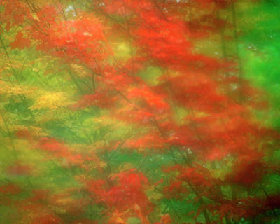 Usa, Vermont Abstract Of Maple Trees Poster
