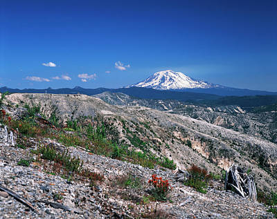 Usa, Washington State, View Of Mt Adams Poster by Kent Foster