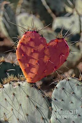 Valentine Prickly Pear Cactus Poster