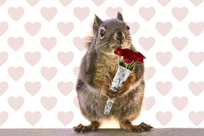 Valentines Day Squirrel With A Dozen Red Roses Poster by Peggy Collins