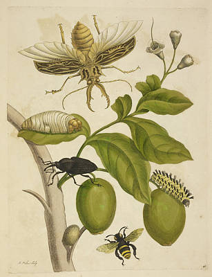 Various Insects Around A Plant Poster