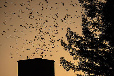 Vaux's Swifts In Migration Poster by Garry Gay