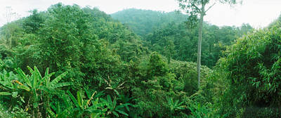 Vegetation In A Forest, Chiang Mai Poster by Panoramic Images