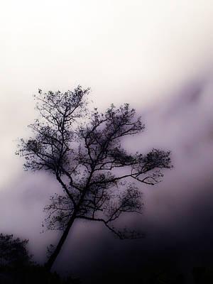 Velvet Mist Poster