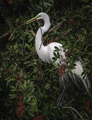 Venice Rookery Egret Poster