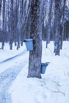 Vermont Maple Syrup Buckets Poster