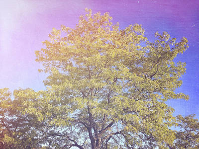 Vermont Tree Light Leak Sunflare  Poster by Andy Gimino