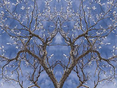 Vermont Winter Mirror Trees Snow Sky Poster