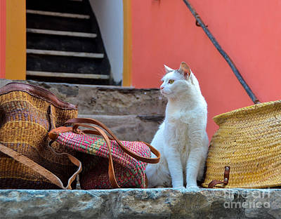 Vernazza Shop Cat Poster by Amy Fearn
