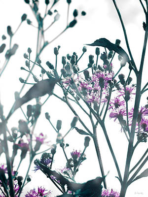 Vernonia  Poster by Shawna Rowe