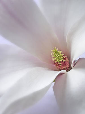 Poster featuring the photograph Vertical White Flower Magnolia Spring Blossom Floral Fine Art Photograph by Artecco Fine Art Photography