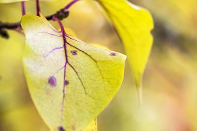 Vibrant Leaves Poster