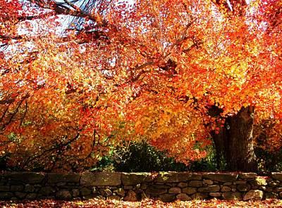 Vibrant Tree Poster