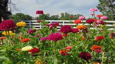Vibrant Zinnia Garden Poster