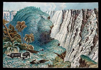 Victoria Falls Buffalo Poster by Gustoimages/science Photo Libbrary