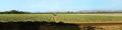 View Of Cantaloup Field, Costa Rica Poster by Panoramic Images
