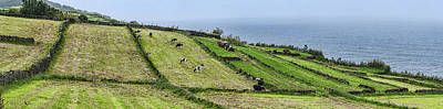 View Of Farmland Along Coast, Terceira Poster