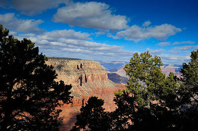 Grand Canyon Through The Junipers Poster