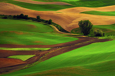 View Of Palouse Cultivation Patterns Poster by Michel Hersen