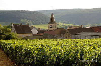 Village Of Monthelie. Burgundy. France Poster