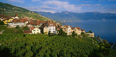 Village Rivaz Between Vineyards & Mts Poster by Panoramic Images