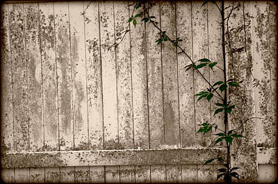 Poster featuring the photograph Vine And Fence by Amanda Vouglas