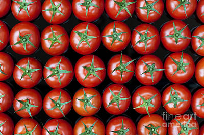 Vine Tomato Pattern Poster by Tim Gainey
