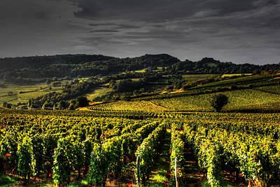 Vines In France Poster by Tom Prendergast