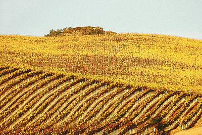Vineyard Abstract Poster