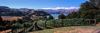 Vineyard, Akaroa Harbour, Banks Poster by Panoramic Images