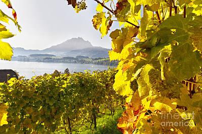 Vineyard At Lake Lucerne Poster