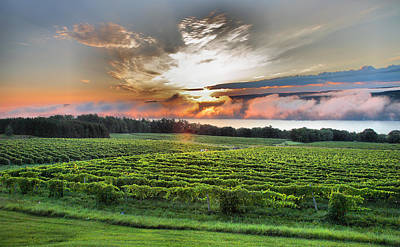 Vineyard At Sunrise Poster