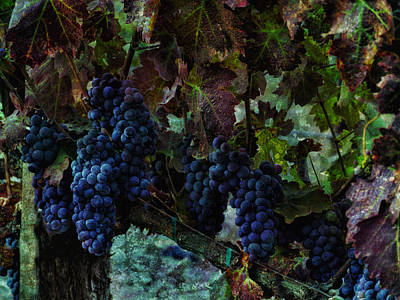 Poster featuring the photograph Vineyard Grapes On Vine Number Three by Bob Coates