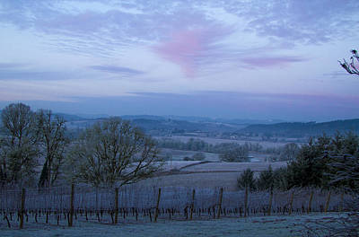 Vineyard Morning Light Poster by Jean Noren