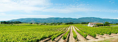 Vineyard With Mountain Poster by Panoramic Images