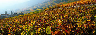 Vineyards And Village In Autumn, Valais Poster by Panoramic Images