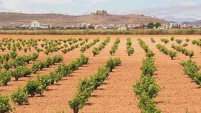 Vineyards, Consuegra, Spain Poster