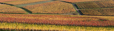 Vineyards In Autumn Near Gleisweiler Poster