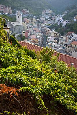 Vineyards In Riomaggiore, Cinque Terra Poster by Carlos Sanchez Pereyra