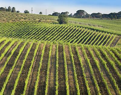 Vineyards In The Chianti Region Poster