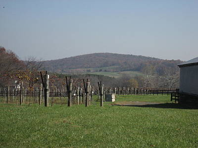 Vineyards In Va - 121229 Poster by DC Photographer