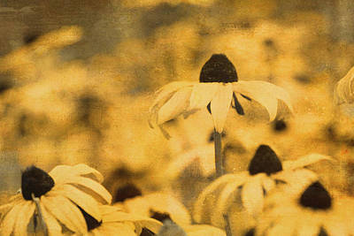 Poster featuring the photograph Vintage Black-eyed Susans by Peggy Collins