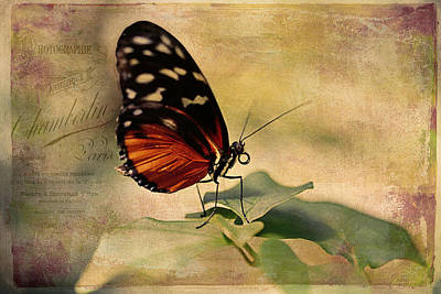 Vintage Butterfly Card Poster by Maria Angelica Maira